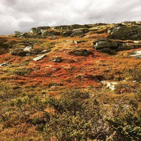 Municipalité de Ringebu, Norvège : photo3.jpg