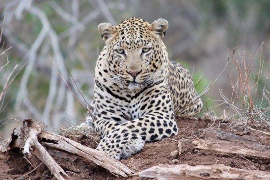 Londolozi Private Game Reserve照片