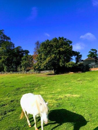 Dedham, UK: Dinky says hi!