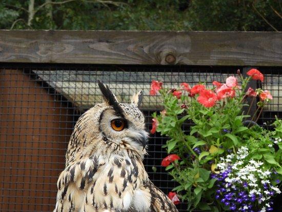 Banbury, UK: Owl
