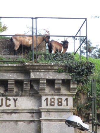 Sucy-en-Brie, Francia: Fort de Sucy