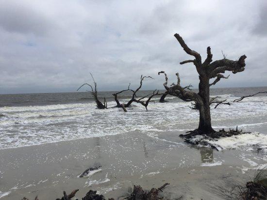 Driftwood Beach: photo0.jpg