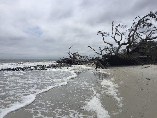 Driftwood Beach: photo2.jpg