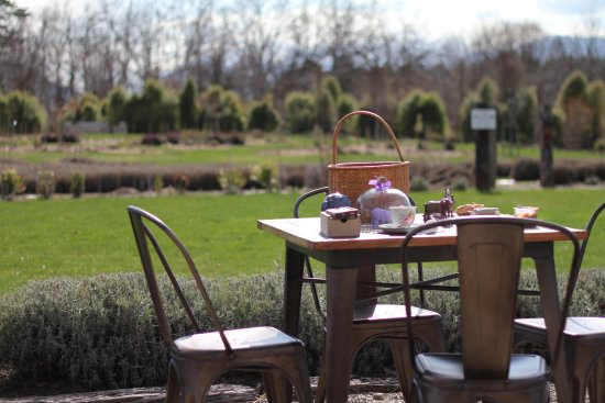 Wanaka, New Zealand: beautiful outdoor setting to enjoy our tea and biscuits (and ice-cream)