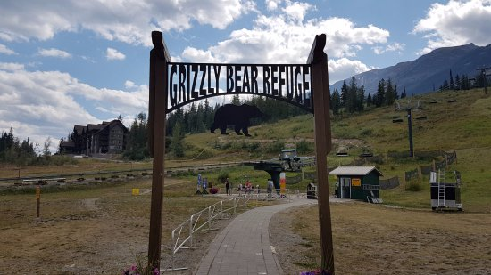 Golden, Kanada: Boo the Grizzly Bear at Kicking Horse Mountain Resort