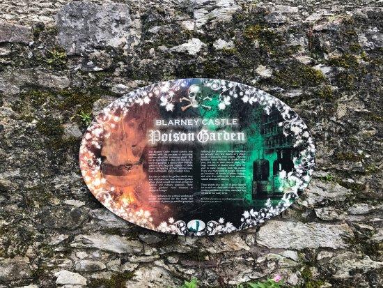 Zamek i Ogrody Blarney: photo2.jpg