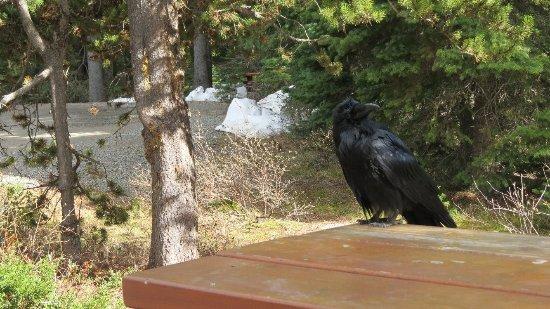 E.C Manning Provincial Park: E.C. Manning Provincial Park