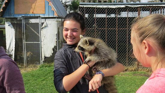 Stratford, Canadá: Take a racoon in your arms.