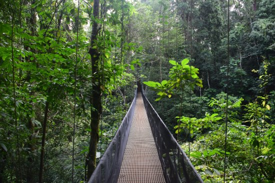 Osa Peninsula, Costa Rica: Suspension Bridge