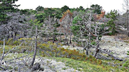 Beech Forest: PicsArt_09-16-03_large.jpg