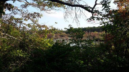 Beech Forest: 20170916_160313_large.jpg
