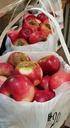 Gopher Glen Farms: fresh apples