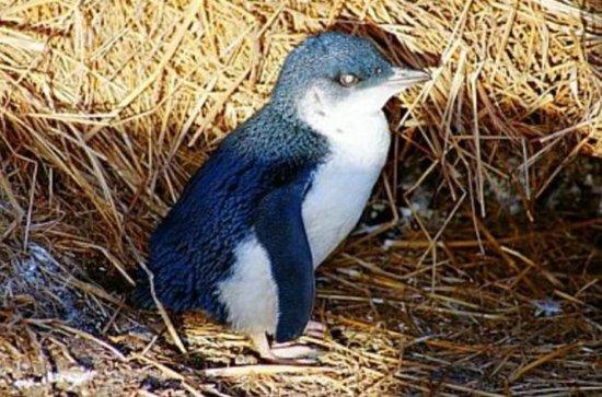 Tour serale della parata dei pinguini