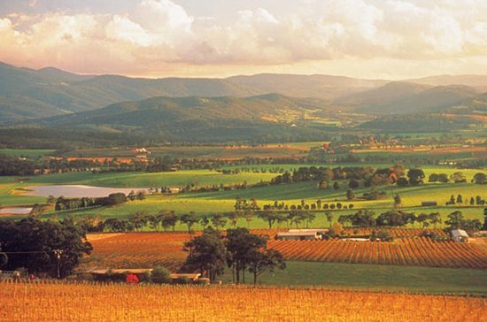 Yarra Valley Wineries with Steam...