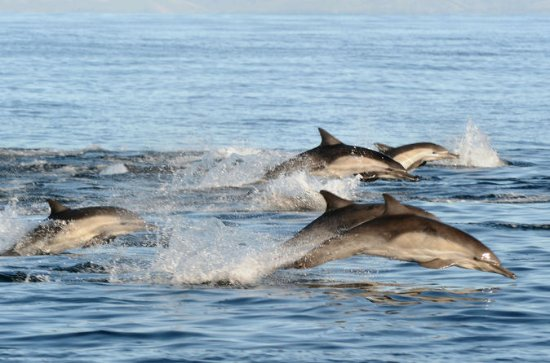 Port Stephens Day Tour with Dolphin...