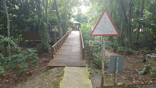 Borneo Nature Lodge: IMG-20170914-WA0005_large.jpg