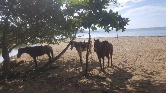 Cocles, Costa Rica: The horses resting