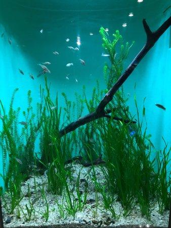 Miyajima Public Aquarium: photo0.jpg