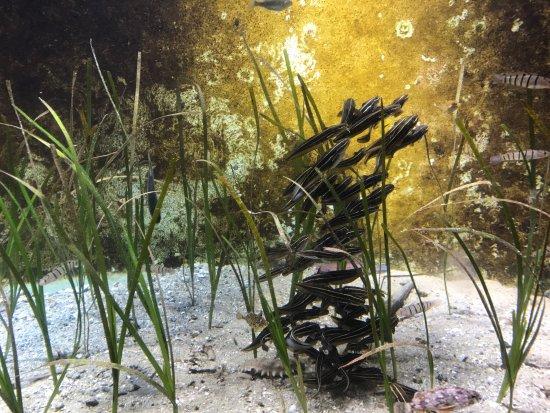 Miyajima Public Aquarium: photo1.jpg