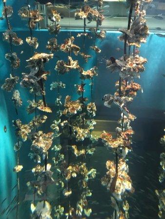 Miyajima Public Aquarium: photo2.jpg