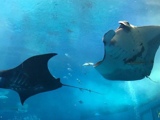 Okinawa Churaumi Aquarium: photo1.jpg
