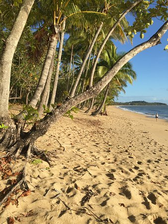 Palm Cove Image