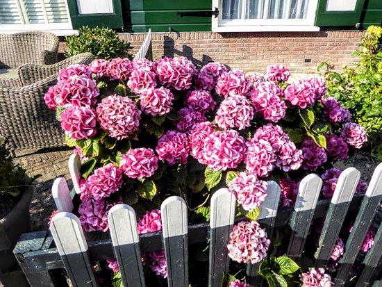 Marken, Nederland: Beautiful flowers in the house garden