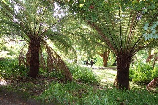 Poolewe, UK : wisteria antartica, mieux qu'à Villa Taranto !!!