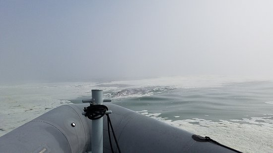 Depoe Bay, OR: Foggy but calm seas  20 feet from the boat