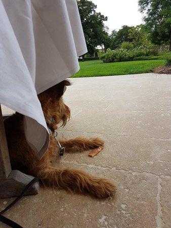 Puligny-Montrachet, France: A decent dog