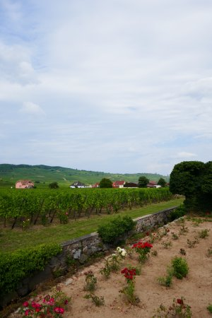 Kientzheim, Frankrike: Domain Weinbach