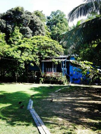 Sukau, Malezya: IMG-20170909-WA0013_large.jpg