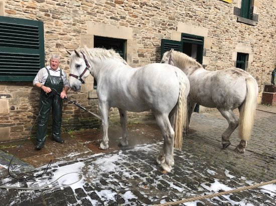 Beamish, UK: The horses love a good hosing down