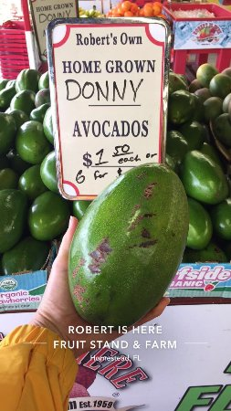 Florida City, FL: Look at the size of that avacado!!