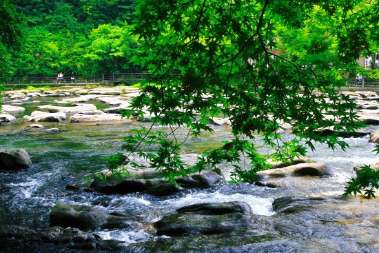 Sekinoo Fall : 夏の関之尾滝・その5