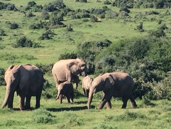 Addo Elephant National Park, Sudáfrica: photo6.jpg