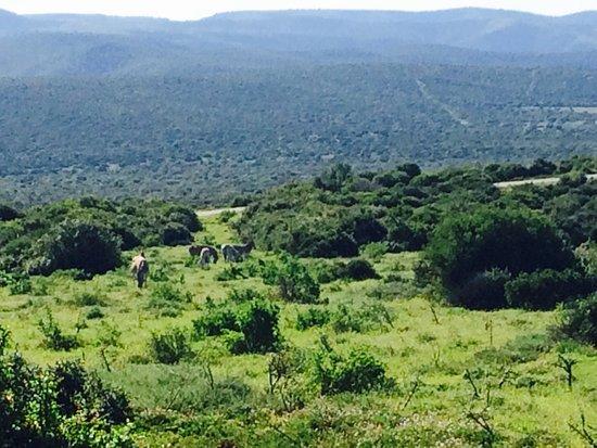 Addo Elephant National Park, Sudáfrica: photo9.jpg