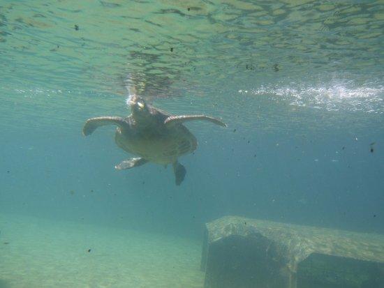 Saint-Leu, Reunión: On se croirait bien sous la mer