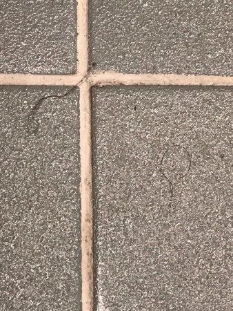 Ibis Sydney World Square: IMG-20170916-WA0371_large.jpg