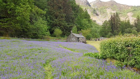 Onich, UK: bluebells at st johns church ballachulish.