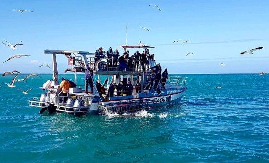 Kleinbaai, South Africa: Shark cage...