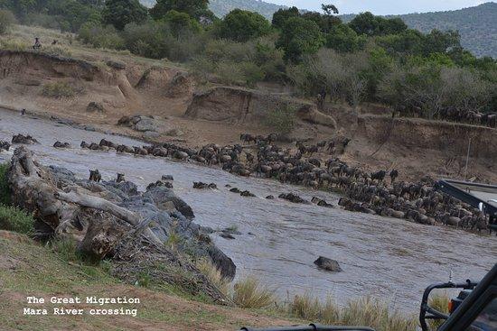 Basecamp Masai Mara: THE GREAT MIGRATION