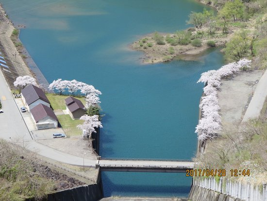 Ono, Japan: ダム湖沿いの桜です。