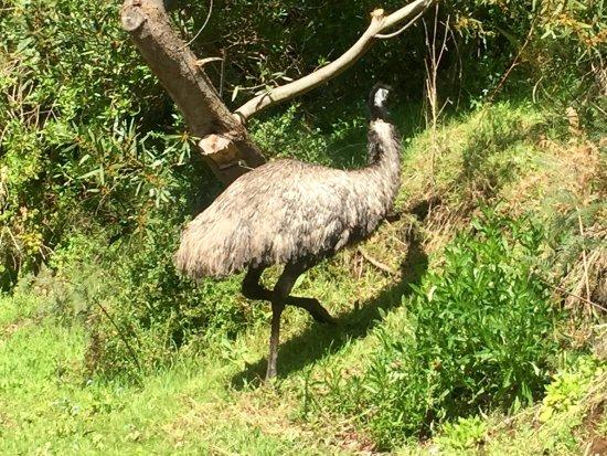 Варнамбул, Австралия: photo9.jpg
