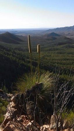 Flinders Ranges National Park, Australia: IMAG1117_1_large.jpg