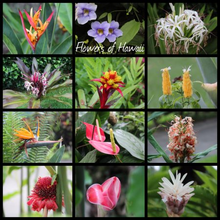 Holualoa, Hawái: Flowers we Saw in the Gardens