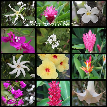 Holualoa, Hawái: More Flowers we saw in the Gardens