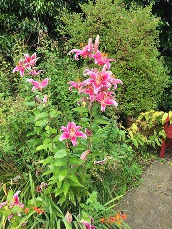 Clarkston, UK: Amazing Lilies