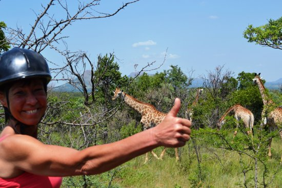 Hartbeespoort, Südafrika: Everyone loves seeing giraffes in the wild!