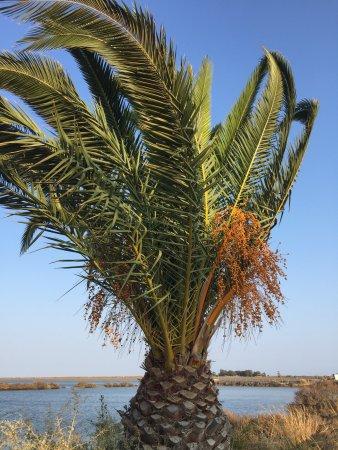 Tavira Island: photo1.jpg